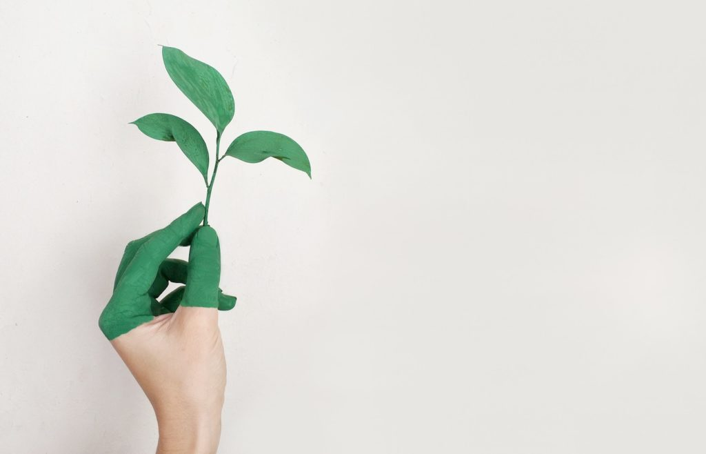 person-s-left-hand-holding-green-leaf-plant
